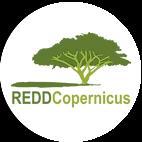 Forest | REDDCopernicus